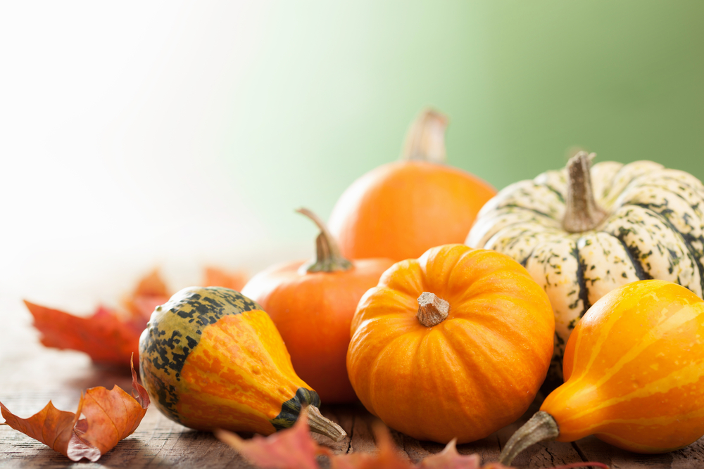 The Amazing Power of Pumpkins